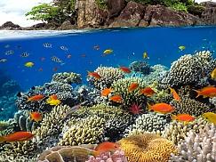 산호섬 투어